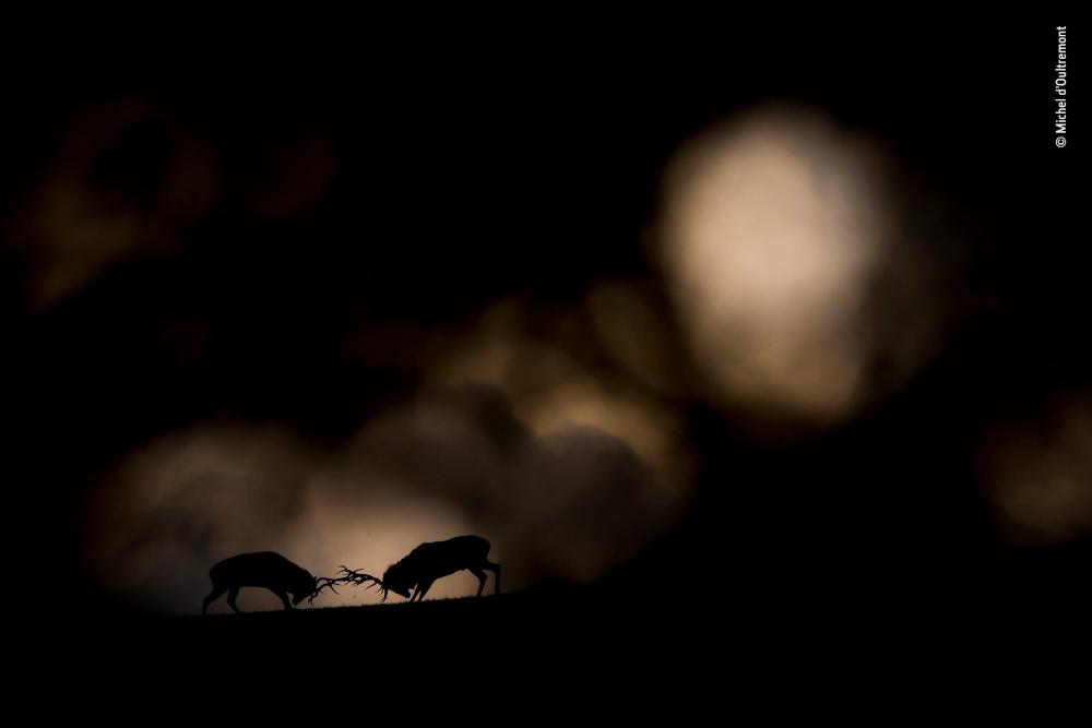 Wildlife Photographer 2019